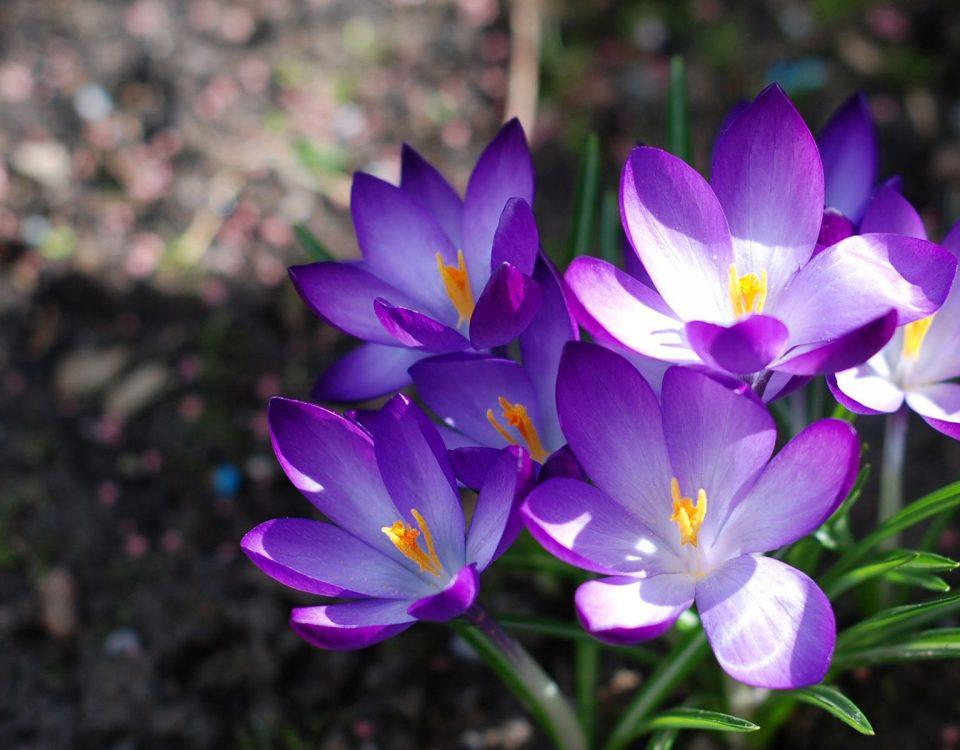 piena attenzione fiori