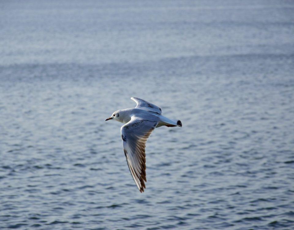 Come mi sono innamorato della meditazione (terza parte) - Mindfulness Sardegna